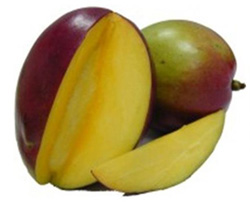МАНГО ИНДИЙСКОЕ (Mangifera indica L.)