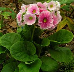 Тюльпаны из бумаги своими руками пошаговое фото